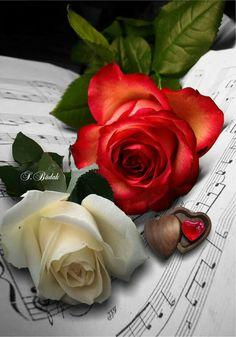 Színes rózsák ♡♡♡