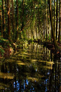 | Photograph Forest of Reflection by Masatoshi Ikeda...