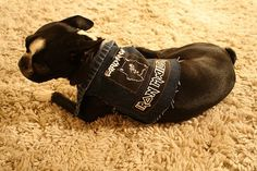 Heavy Metal Dog Vest by TotallyJuliaRAd on Etsy, $12.00