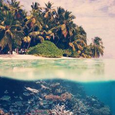 Tropic dream
