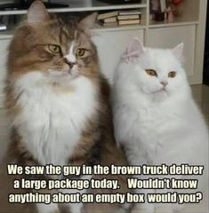 One of the Best collections of funny animal pictures,Cute funny animals, Funniest animals you'll see all day. Just look Funny Web Zone Best Animal Pictures Picdump of The Day 4 that will make you smile 24 funny animal pics. Funny Cat Compilation, Funny Animal Memes, Funny Cat Videos, Animal Quotes, Cute Funny Animals, Funny Animal Pictures, Funny Cute, Cute Cats, Funny Memes