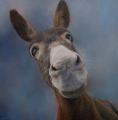 Sam Dolman Donkey Animal Limited Edition Print by sdolman on Etsy