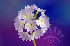 Wilde bloemen. http://markrademaker.nl