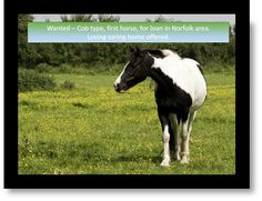 Unfortunately the website for Rehome My Horse has had to close My Horse, Horses, Wanted Ads, Cob, Norfolk, Searching, This Is Us, Platform, Website