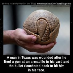 A man in Texas was wounded after he fired a gun at an armadillo in his yard and the bullet ricocheted back to hit him in his face.
