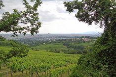 Der Wiener Stadtwanderweg 1 auf den Kahlenberg ist nur zu empfehlen! Der Weg ist ideal, wenn man mal aus der Stadt raus und in die Natur will.