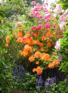 Azalea | The 10 Best Plants for Your Pacific Northwest Garden