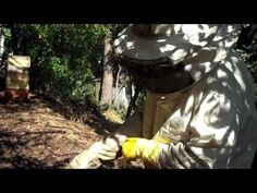 Backwards Beekeepers: Intro videos on beekeeping. This one shows how to do the crush and strain method for honey extraction and how to make a honey separator with two buckets.