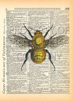 Bumble Bee insect 1800's illustration printed by PrintHouseCompany, $12.00