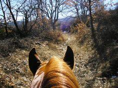silent, forest, horse...peaceful  www.gredosacaballo.com