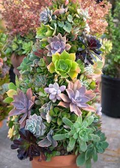 Cr er un terrarium de plantes quelles plantes choisir quel contenant quel substrat de - Plantes d int u00e9rieur faciles d entretien ...