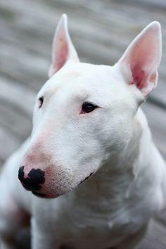 #dog nariz de corazón