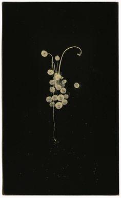 Masao Yamamoto, From: A Box of Ku