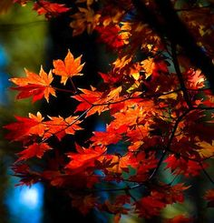 Fall colors  #FallFashionColors ... my  favorite season