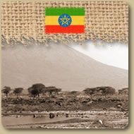 Ethiopie: Limu  Le Limu Ethiopien offre un arôme corsé ainsi qu'un parfum spécial à la fois de fruit et de sucre avec des accents de citron. À déguster au petit déjeûner. 454g (1 lb)  Prix: 10,85 $