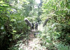 Tim Prebble, a film sound designer, posted his field recordings of Papua New Guinea (he was prepping sound for a film). Read his excellent post and take a listen!