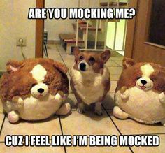 visit our page and find all pics that you love and want [link] Funny-corgi-stuffed-animals Funny Animal Memes, Animal Quotes, Cute Funny Animals, Funny Dogs, Animal Funnies, Weird Dogs, Funny Dog Jokes, Cute Dog Memes, Funny Riddles