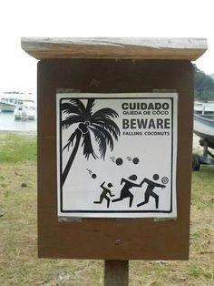 É melhor não sentar a sombra de um coqueiro kkkk - Vila do Abraão Ilha Grande