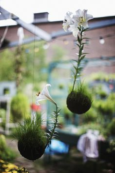 I like the idea of this hanging garden.  You could even do this with herbs in the kitchen.  Fun!