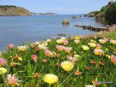 Meloi beach, spring flowers