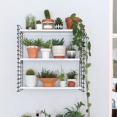 Another plant shelfie that I made for my latest @vtwonen blog! You can read the complete article on my blog as well... #plants #shelfie #greens #urbanjunglebloggers #urbanjungle #tomado #vintage #flowerpots #interior #interiorstyling #vtwonen