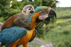 Il linguaggio dei pappagalli