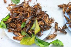 This also has a link to the report!   No protein source is more sustainable than crickets, the Western gateway bug, but we need more cricket farmers to drive down the cost.