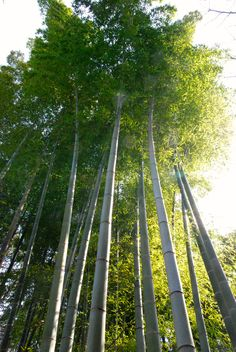 Bambuswald - diese finde ich tagsüber wunderschön aber Nachts doch sehr gruselig!
