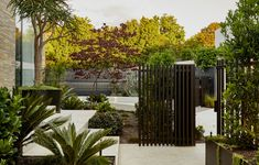 Cultivated Wilderness In Inner Melbourne Exterior Design, Interior And Exterior, Landscape Design, Garden Design, Melbourne Garden, Cactus, Modern Courtyard, Tiered Garden, Tropical