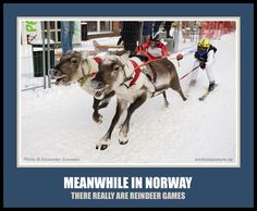 Meanwhile in Norway meme. There really are reindeer games. Norwegian Sami Saami ski skiing funny humor From Norskarv.com.