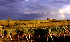 Bordeaux- looking forward to wine tasting here- Le Medoc and St. Emilion regions.