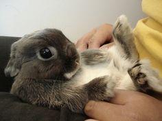 Tickle Me Bunny #bunny #rabbit