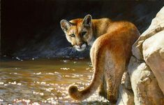 Bonnie Marris - SHOWDOWN - Mountain Lion - Puma - Cougar
