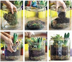 diy plant terrarium by nicole cammorata of scarlet and sterling  I wanna  make mini ones in mason jars and put them on my deck and on the table for the party!