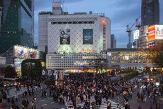 Shibuya Crossing Takeshita Street, Change Your Eye Color, Meiji Shrine, Ueno Park, Cherry Blossom Season, Getting Played, Japanese Characters, The Beautiful Country