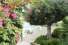 Vista trasera. #terraza #jardín #sol #alicante #paisajismo #arquitectura