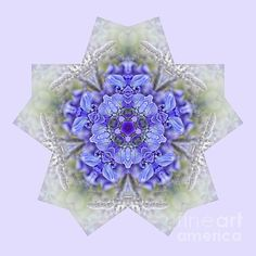 #PRETTY #WISTERIA #KALEIDOSCOPE by #Kaye #Menner #Photography Quality Prints Cards and more at: http://kaye-menner.artistwebsites.com/featured/pretty-wisteria-kaleidoscope-by-kaye-menner-kaye-menner.html