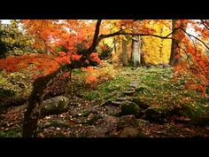 Hezký večer s relaxační hudbou - YouTube Relaxing Music, Mantra, Country, World, Youtube, Painting, Singers, Actresses, Musica