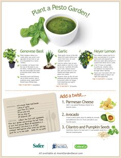 Plant a pesto garden and impress your dinner party guests with this delicious recipe!