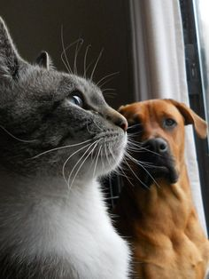 Cute Images Of Cat And Dog Couples