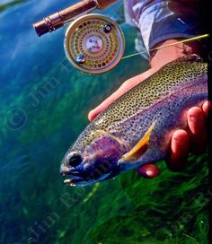 Jim Rowinski Photography - Photo detail - Releasing a Wild Rainbow Trout