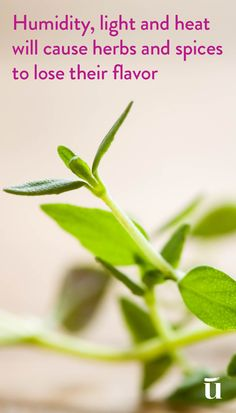 Humidity, light and heat will cause herbs and spices to lose their flavor #LuvoTips