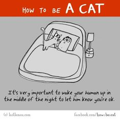How to be a cat....