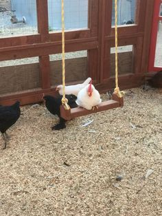 chicken roost ideas