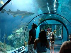 Moody Gardens Aquarium - the highlight of the visit