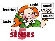 5 senses bear science and art activity could even make it a rh pinterest com