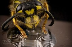 Wasp hypnotized by eprom chip by SagaOptics