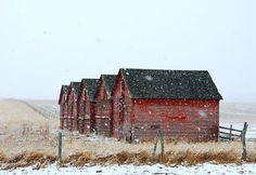 Beautiful Photo of Five small Barns