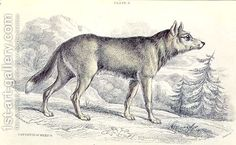 Lyciscus-Cagottis-Mexican-Coyote-1845%2C-Plate-6-From-Vol-4-Of-Sir-William-Jardines-The-Naturalists-Library%2C-Pub.-1833-45.jpg 600×369 pixels