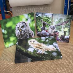 #owls #wildlife #wildlifephotography